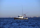 Willis Beal-RP40 2003-Aurora Marie Long Island-New York-United States-On The Fishing Grounds-1093191 | Thumbnail