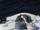 Carver-500 Cockpit Motor Yacht 1997-Happenstance Stuart-Florida-United States-Ground Tackle-1340996 | Thumbnail